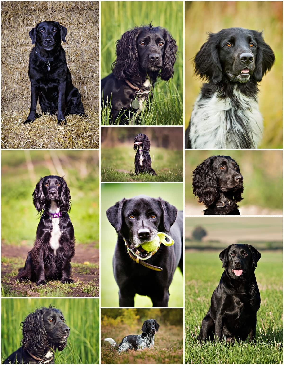 Dog Photography-Black Dogs