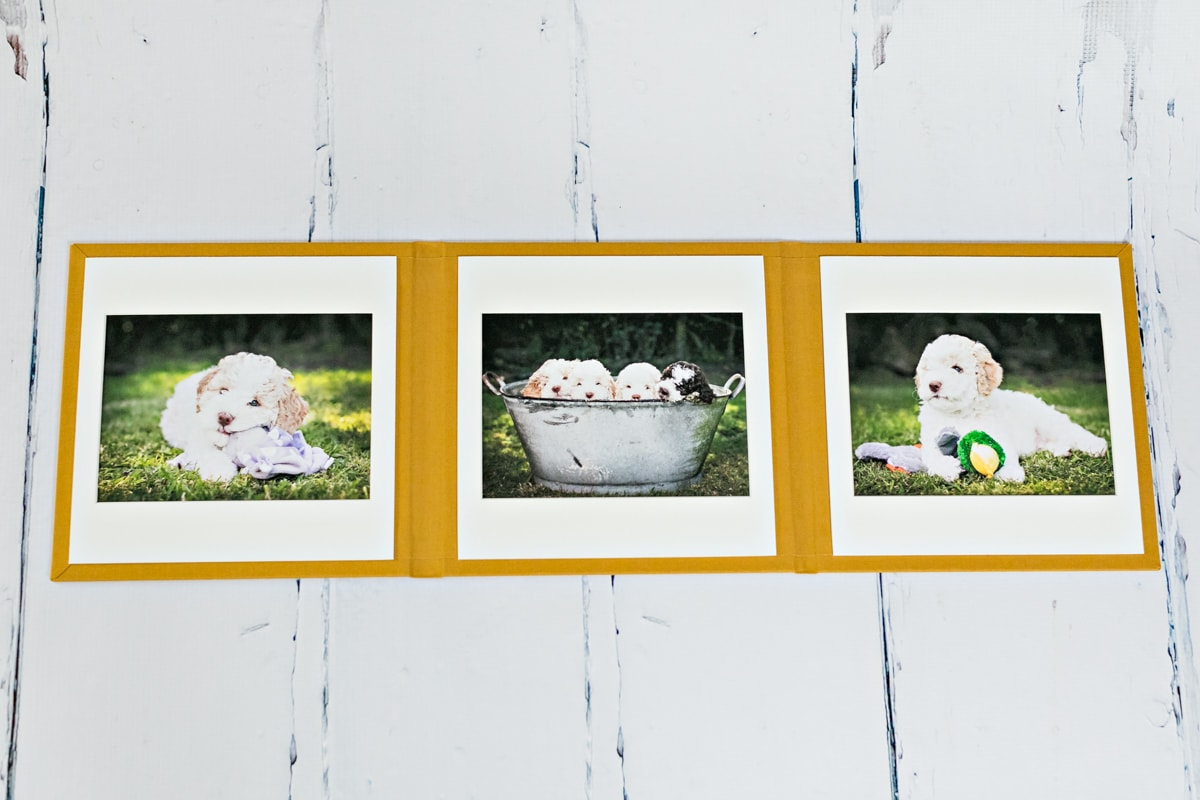 A 8x8 inch trio portfolio showing all 3 images of puppies.