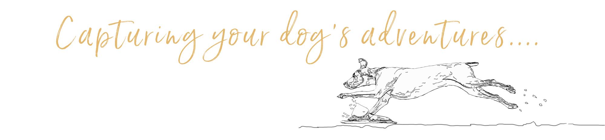 A Capturing your dog's adventure caption